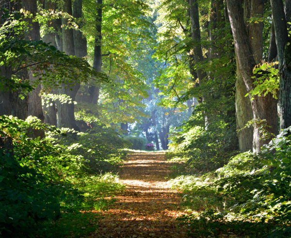 להתפתח מעץ לפרדס – צמיחתכם כמטפלים ומאמנים